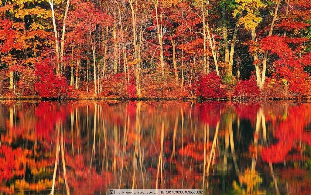 枫叶树倒影 山水 秋色枫叶 风景 摄影