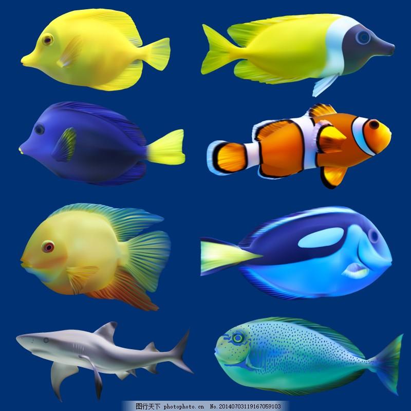 逼真海洋鱼类设计 热带鱼 小丑鱼 蓝吊紫吊 黄尾 帆吊 蓝色图片