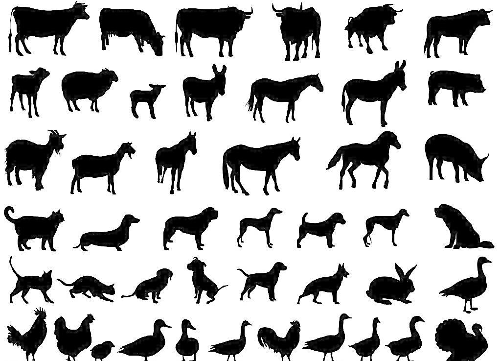 家禽家畜剪影图片免费下载 eps 宠物 动物剪影 狗 鸡 家禽家畜 家畜