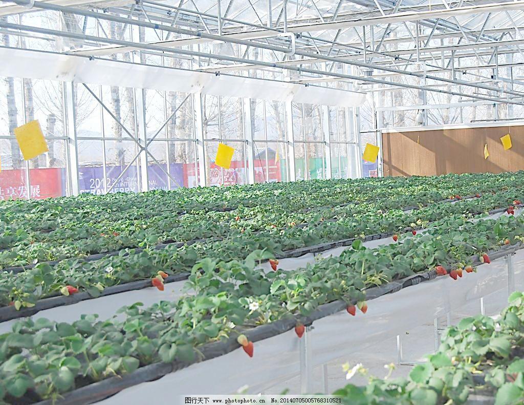 壁纸 成片种植 风景 植物 种植基地 桌面 1024_791