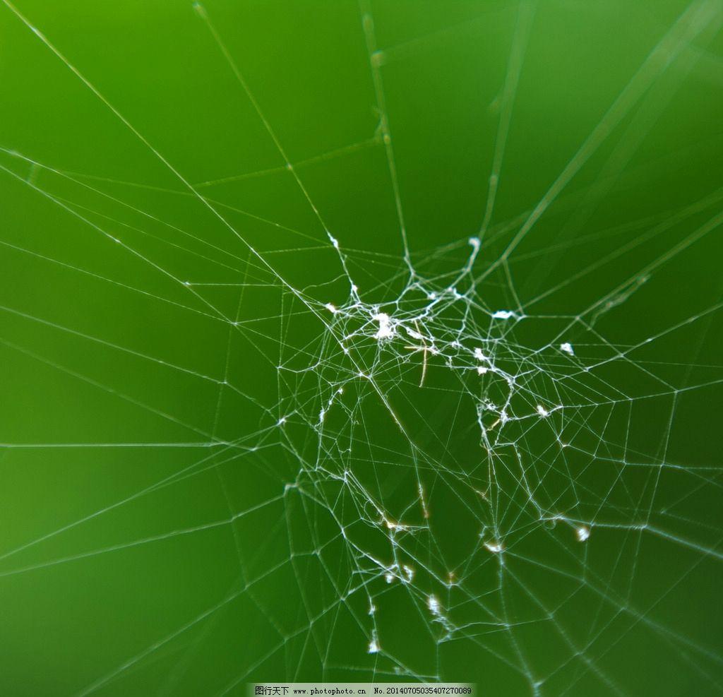 蜘蛛网 蜘蛛 网 复杂 联络 网络 动物 昆虫 生物世界 摄影 72dpi jpg