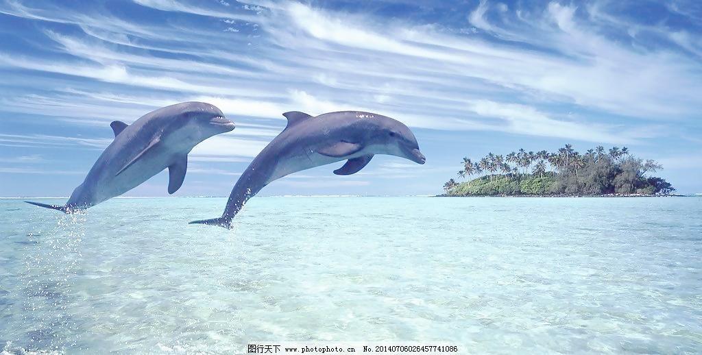 海豚图片免费下载 72dpi jpg 大海 风景 海景 蓝天 沙滩 摄影 夏天 自