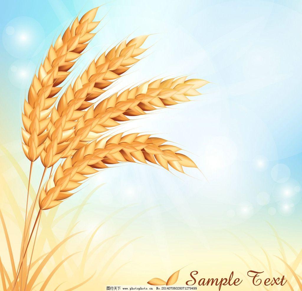 麦穗 小麦 粮食 手绘 金色麦穗 装饰 设计 餐饮美食      生活百科 矢
