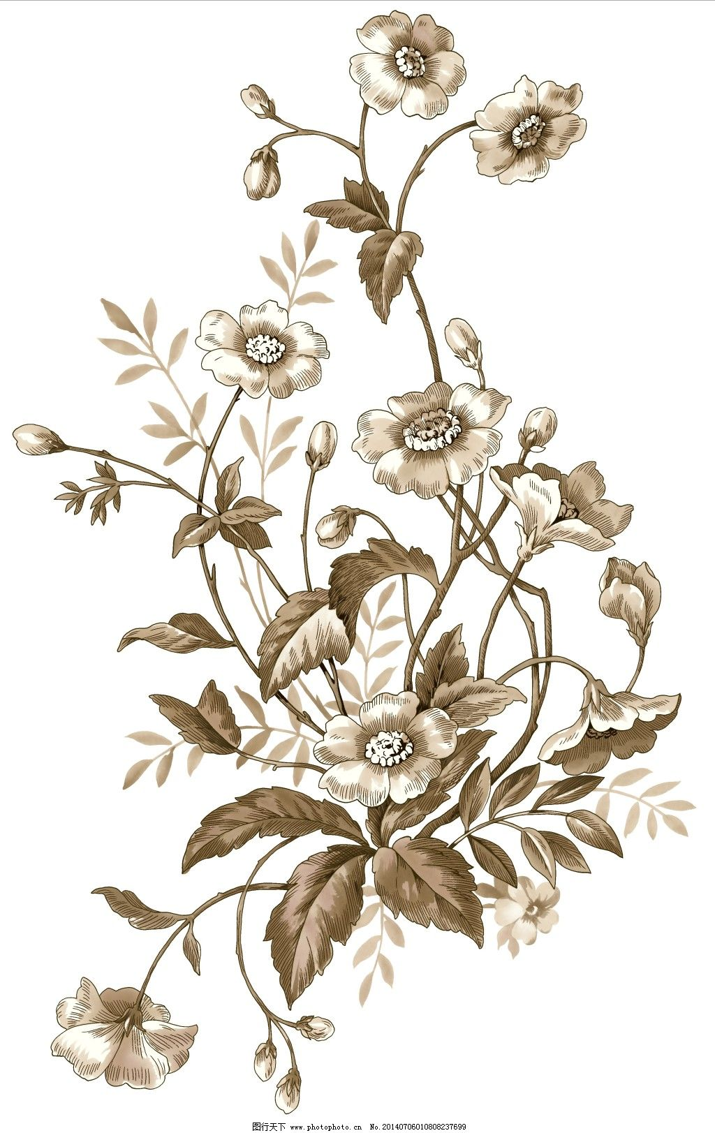 手绘素材 手绘图 花朵