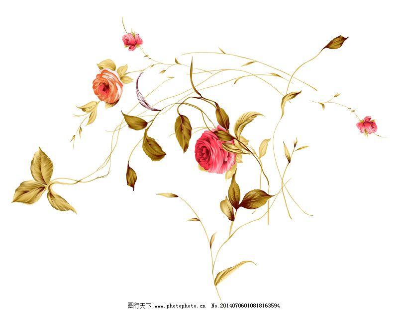 手绘图 月季花枝