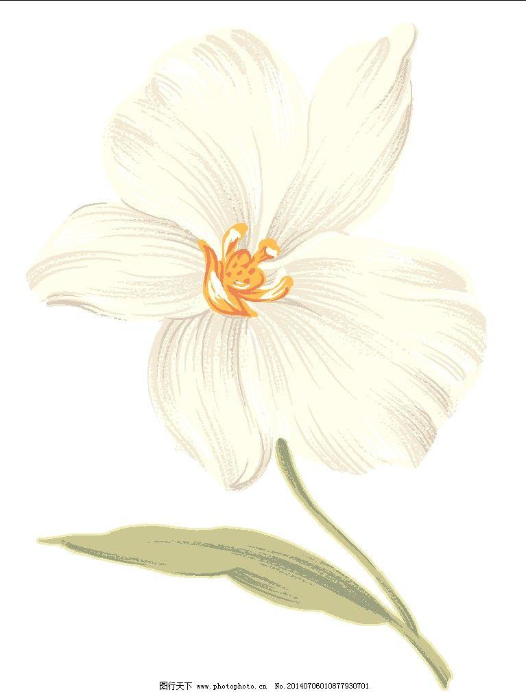 手绘图 素色花 手绘图