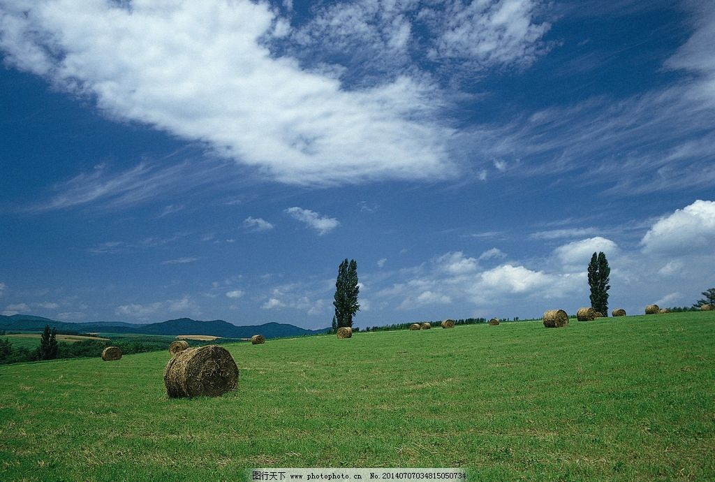 四季景观 植物 绿色 森林 大自然 树木 摄影