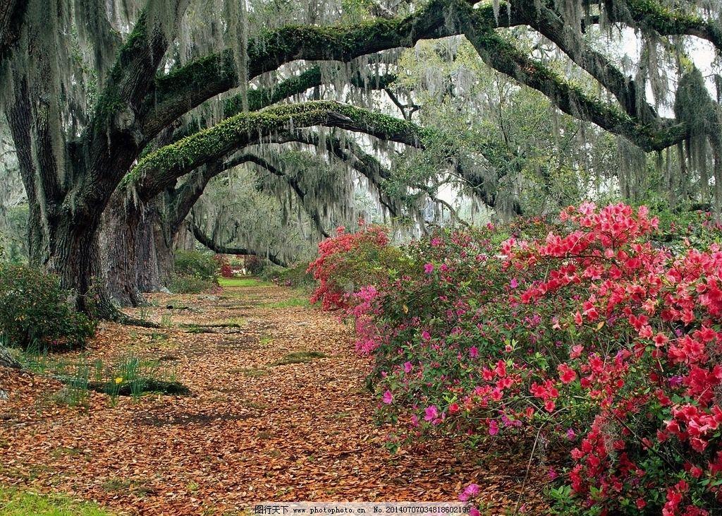 花丛风景素材 小道 绿色代表 大自然风景 背景图 摄影