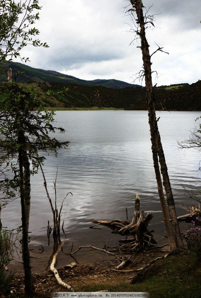 枯树 云南 香格里拉 普达措 森林公园 古树 海边 自然风景 自然景观