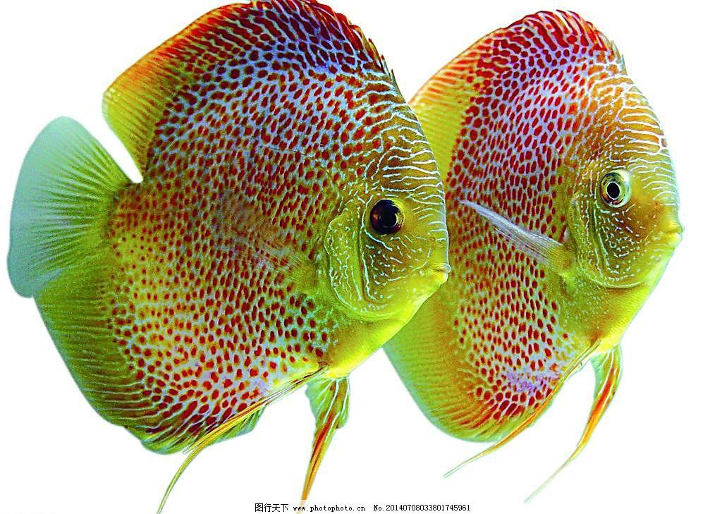 壁纸 动物 水果 鱼 鱼类 1024_729