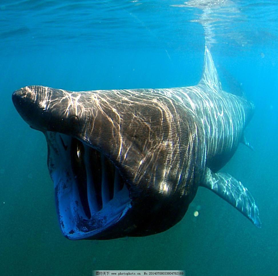 关于水底动物的简笔画