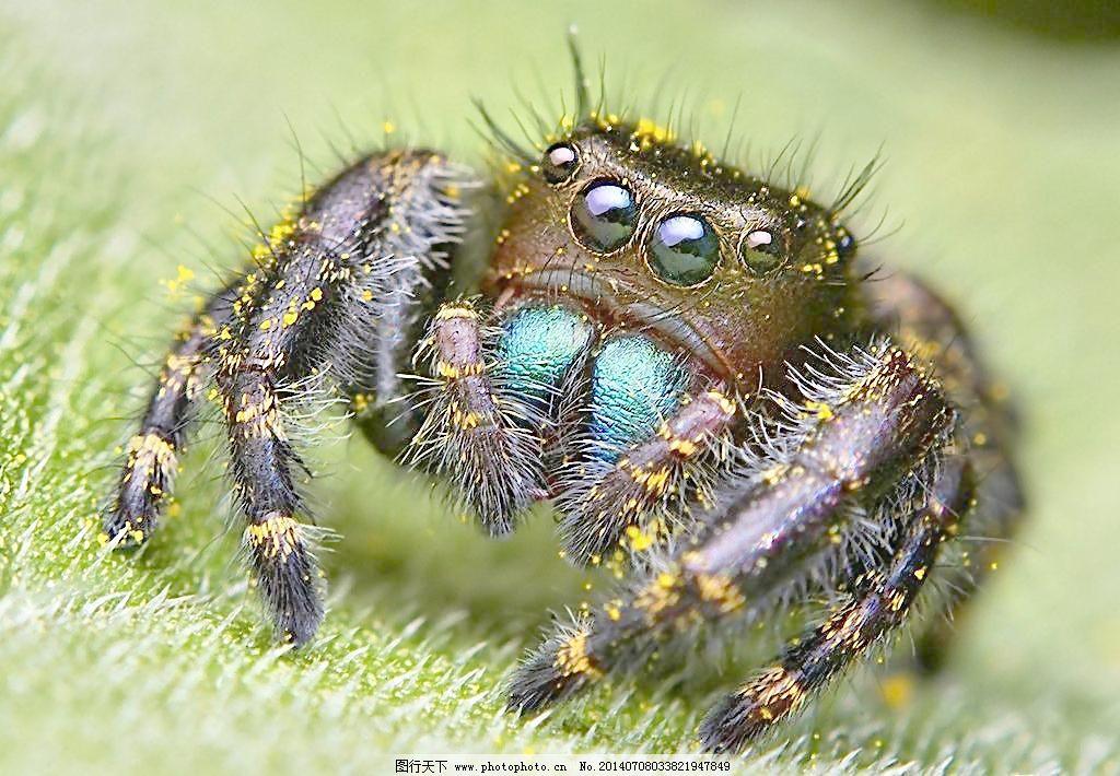 红蜘蛛3 迅雷下载