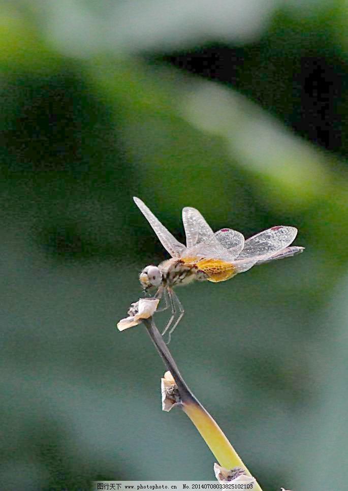 怎么折蜻蜓【动物篇】