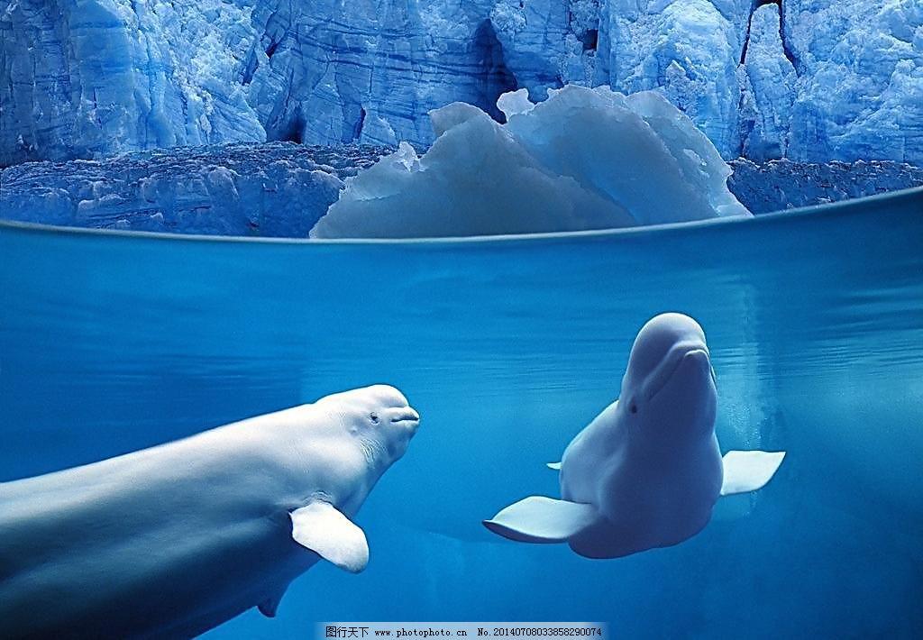 jpg 海底动物 摄影 生物世界 鱼翅 鱼类 豚 白豚 鱼翅 海底动物 海豚
