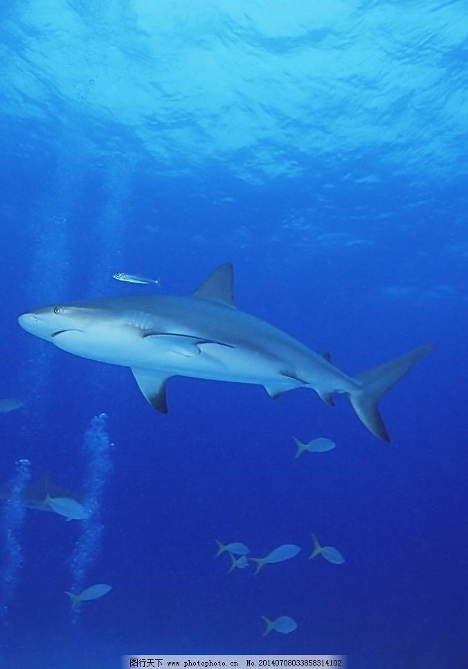 壁纸 动物 海洋动物 桌面 676_966 竖版 竖屏 手机