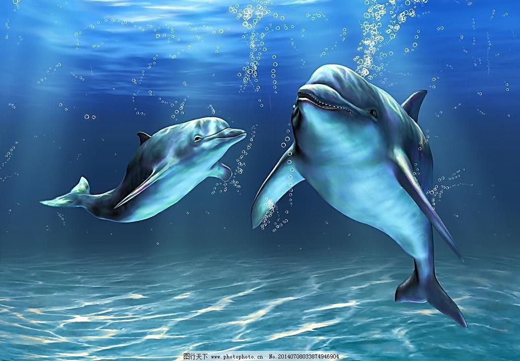 壁纸 动物 海洋动物 桌面 1024_711