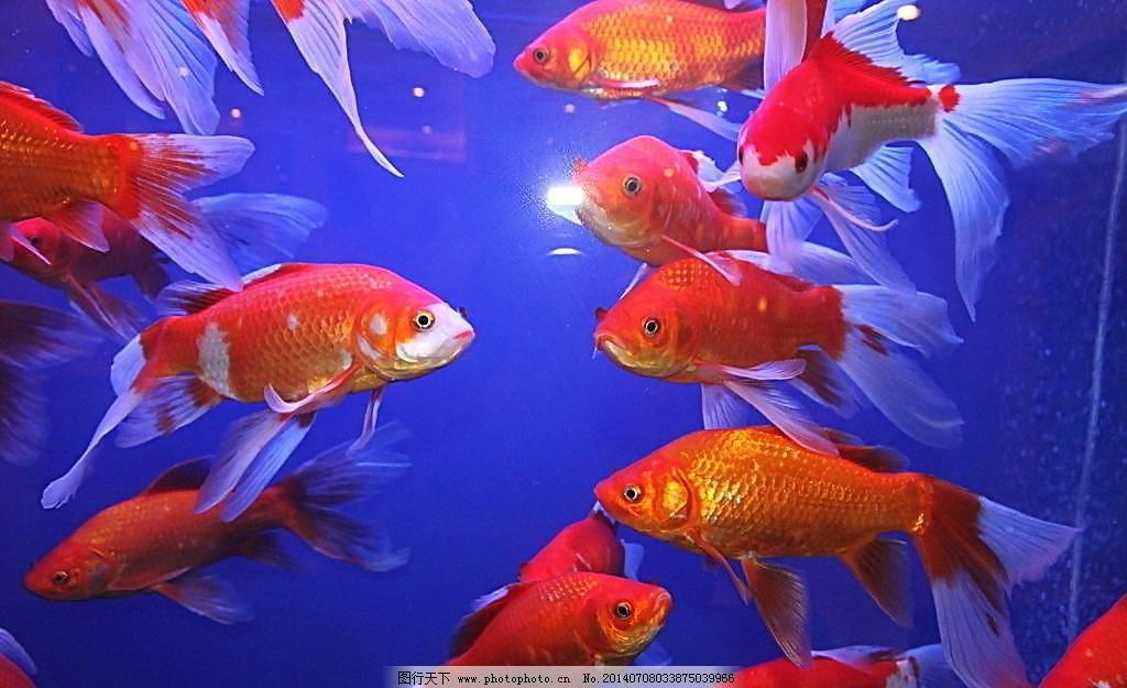 壁纸 动物 鱼 鱼类 1024_625