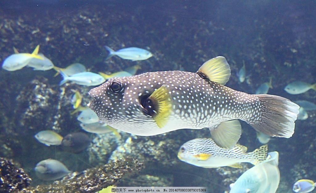 壁纸 动物 海底 海底世界 海洋馆 水族馆 鱼 鱼类 1024_625