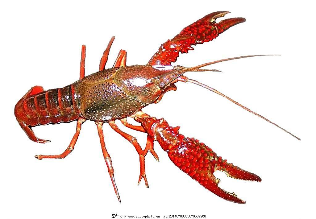 48段魔尺变龙虾步骤图