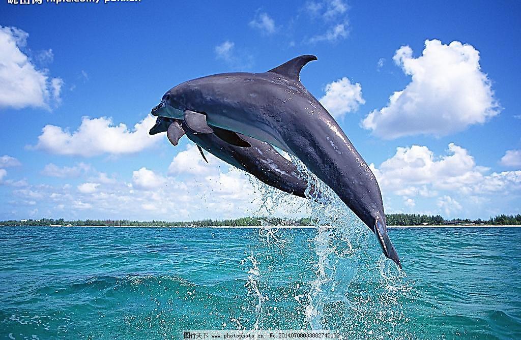 壁纸 动物 海洋动物 桌面 1024_669