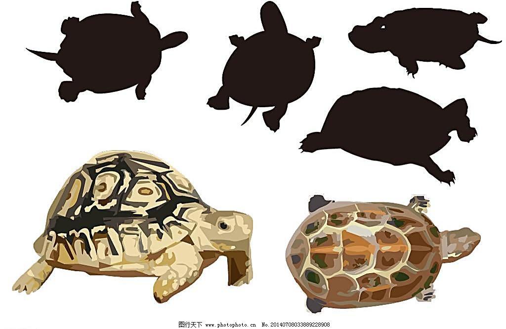 海洋鱼类 海龟简笔画