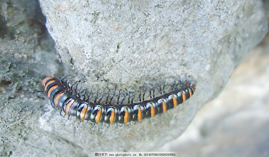 小虫子图片免费下载 72dpi
