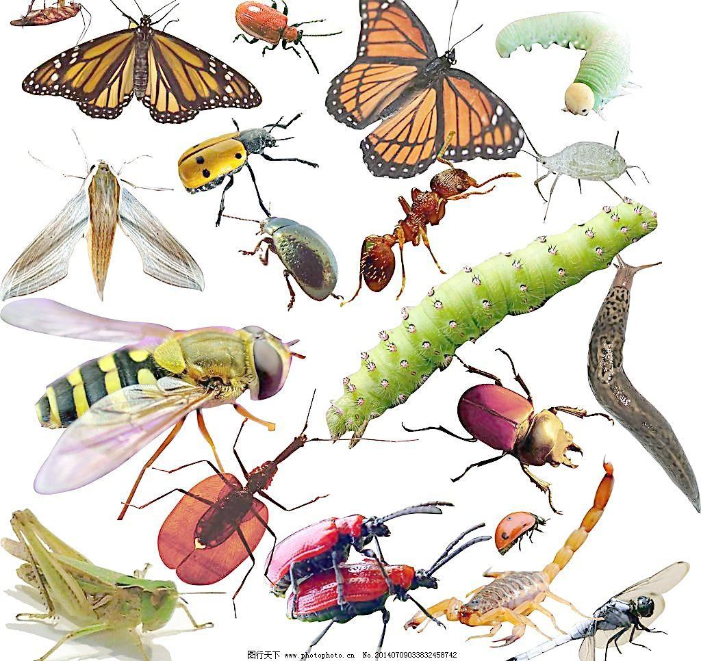 吃害虫的动物简笔画