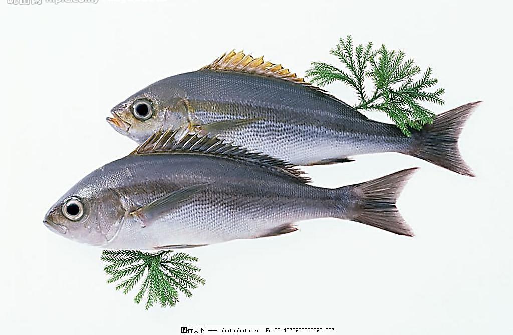 壁纸 动物 鱼 鱼类 1024_669