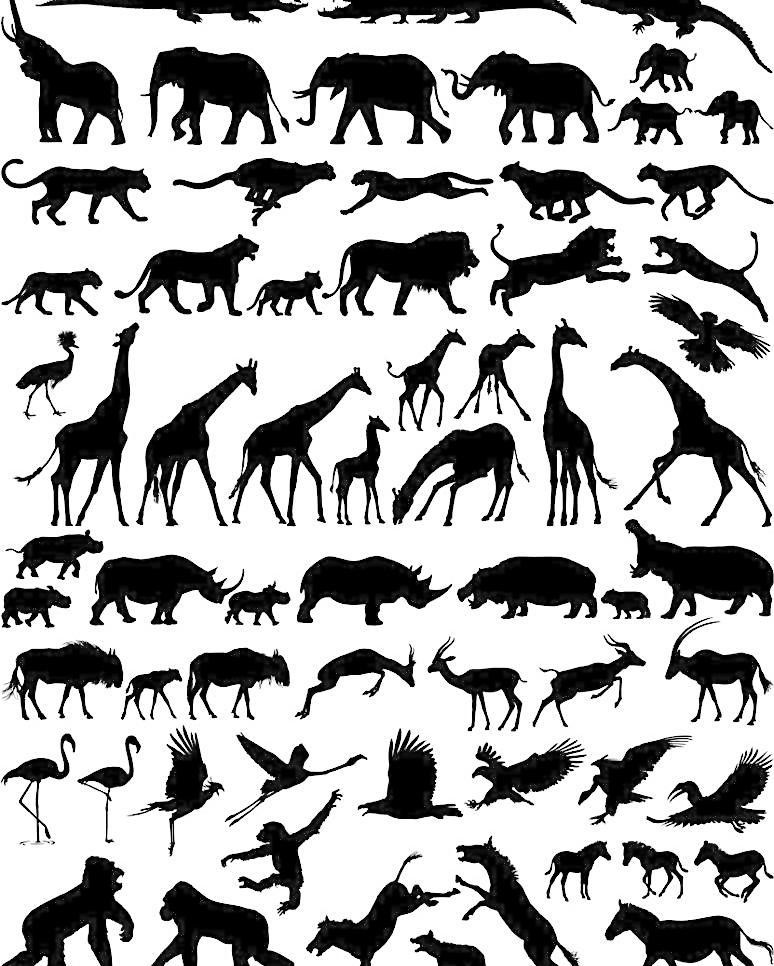袋鼠 动物 动物剪影 动物主题 鳄鱼 猴子 动物剪影 大象 长颈鹿 狮子