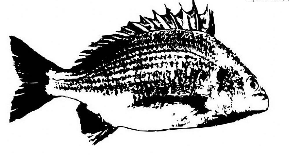 写意画鱼图片