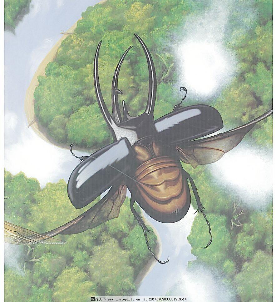 手绘高清甲虫犀金龟图片
