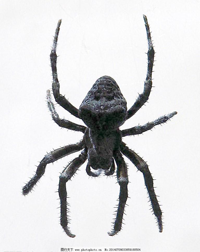 蜘蛛橡皮泥手工步骤