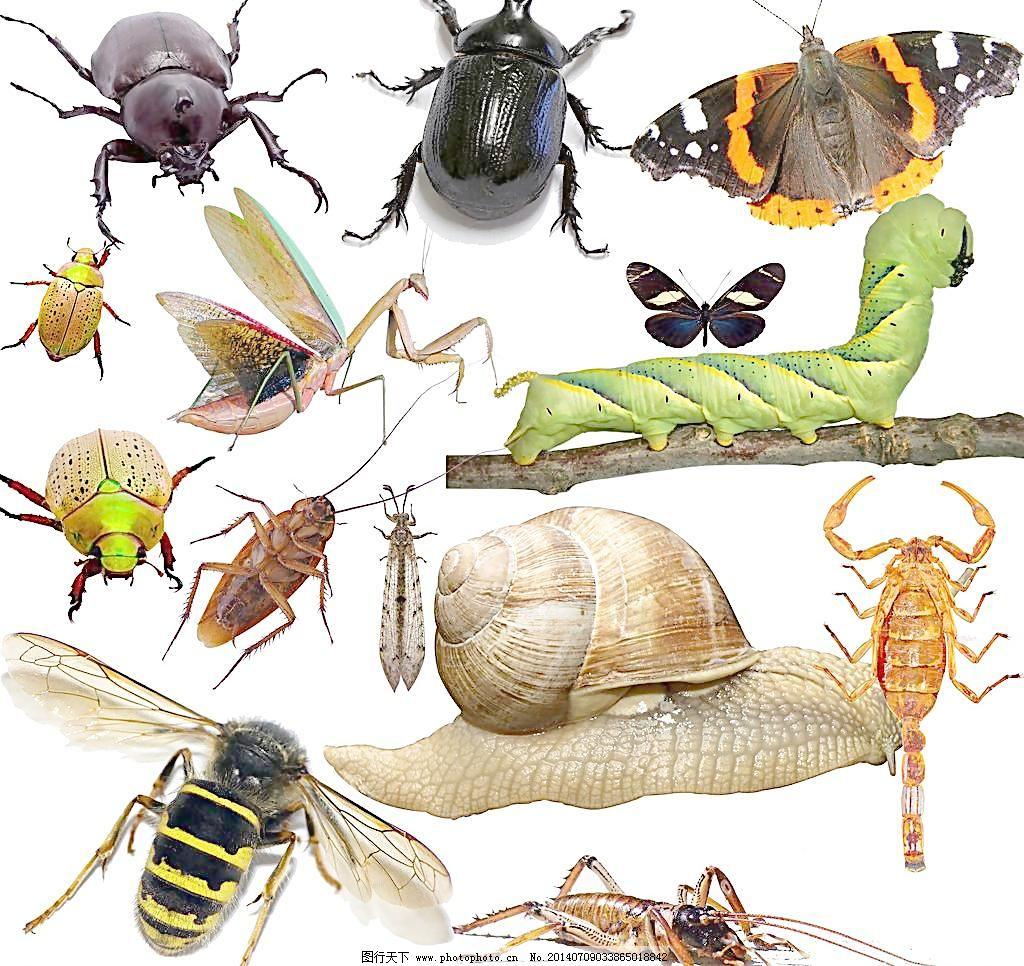 昆虫害虫图片