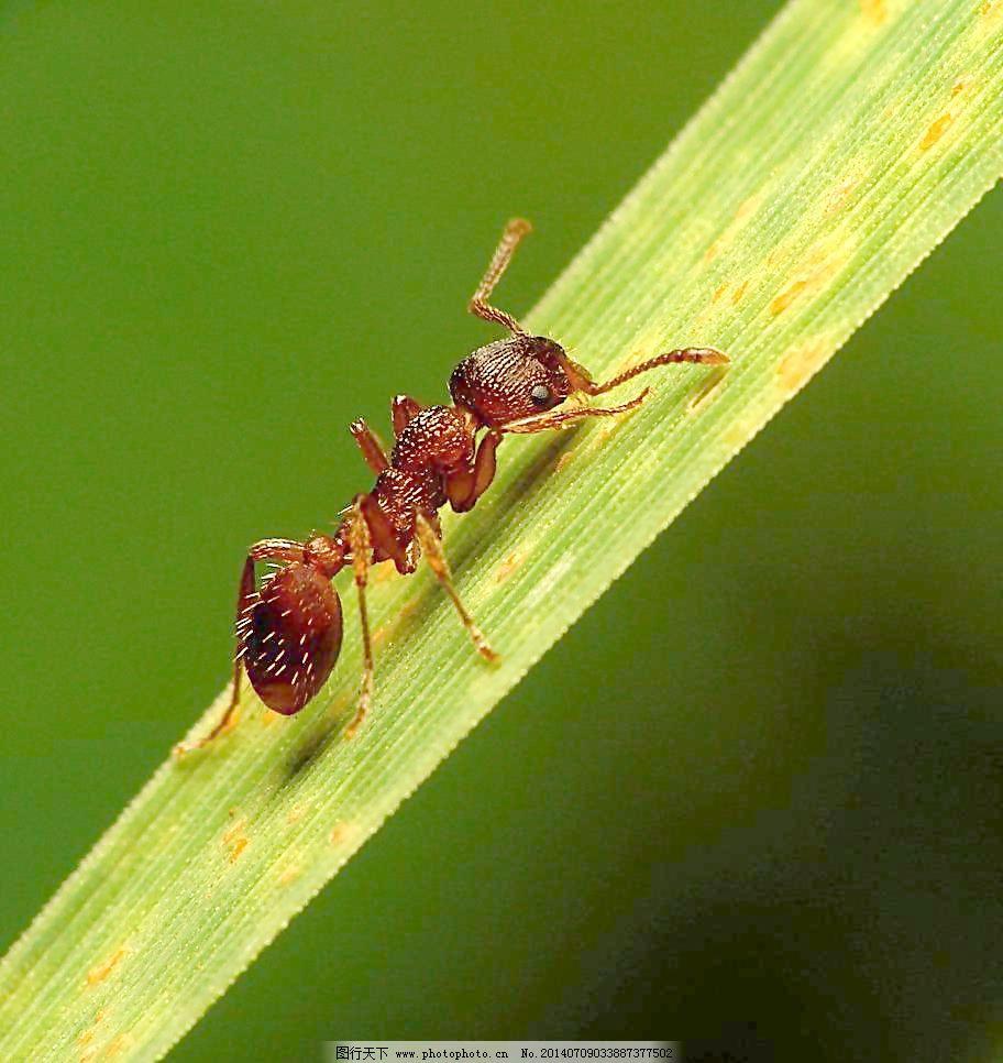 折纸蚂蚁的小说下载_折纸蚂蚁txt微盘-他不爱我折纸蚂蚁微盘 折纸蚂蚁的小说微盘下载 ...