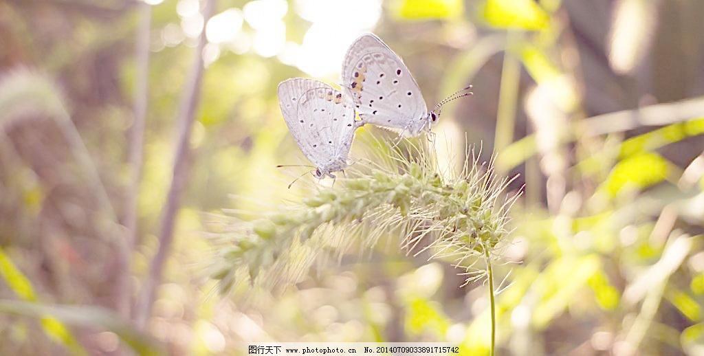蝴蝶/两小无猜 蝴蝶图片