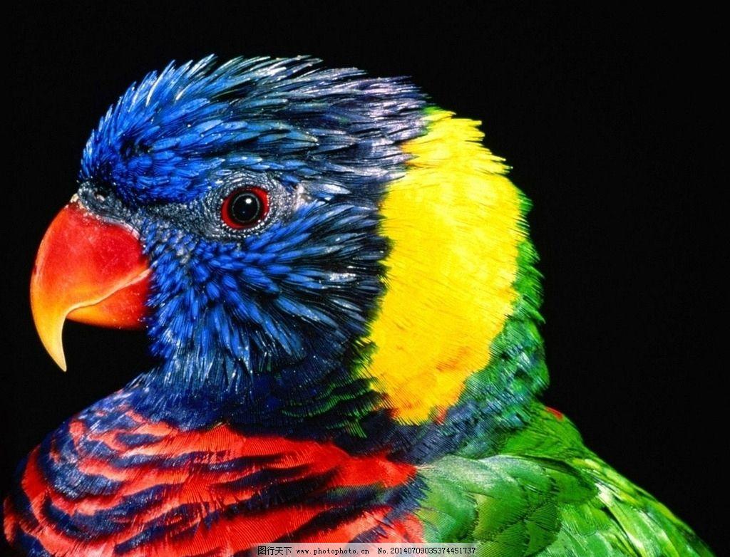 壁纸 动物 鸟 鹦鹉 1024_782