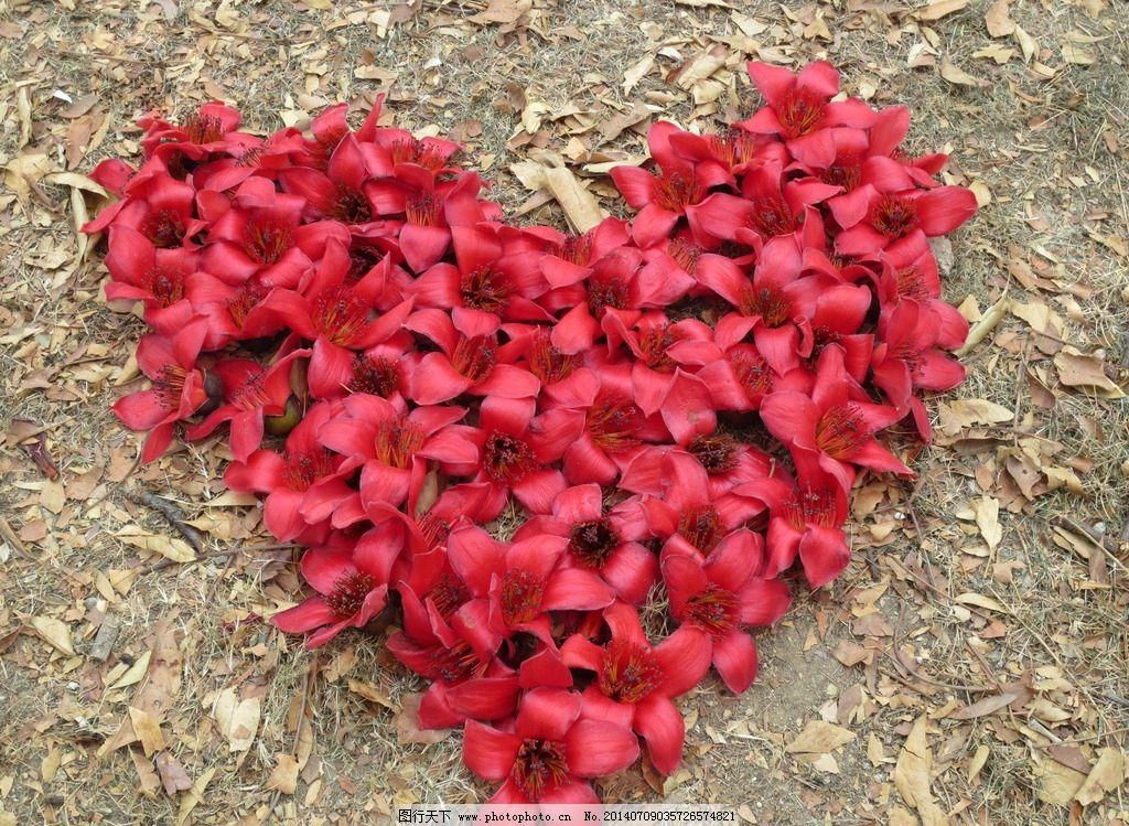红色心形木棉花图片