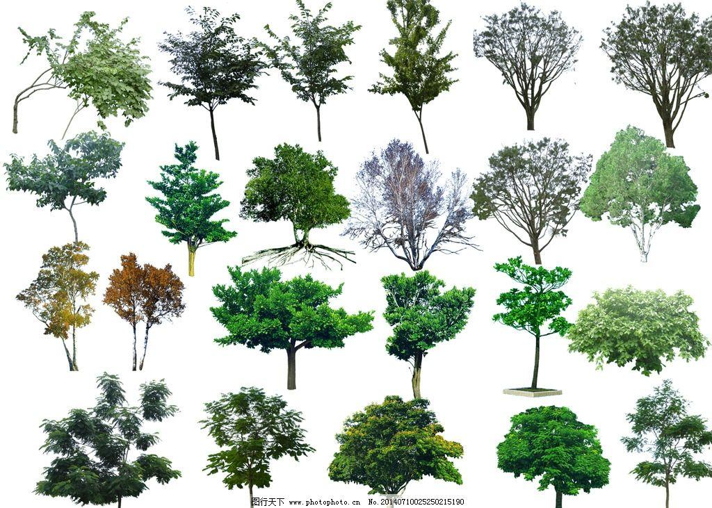 精美树木素材图片