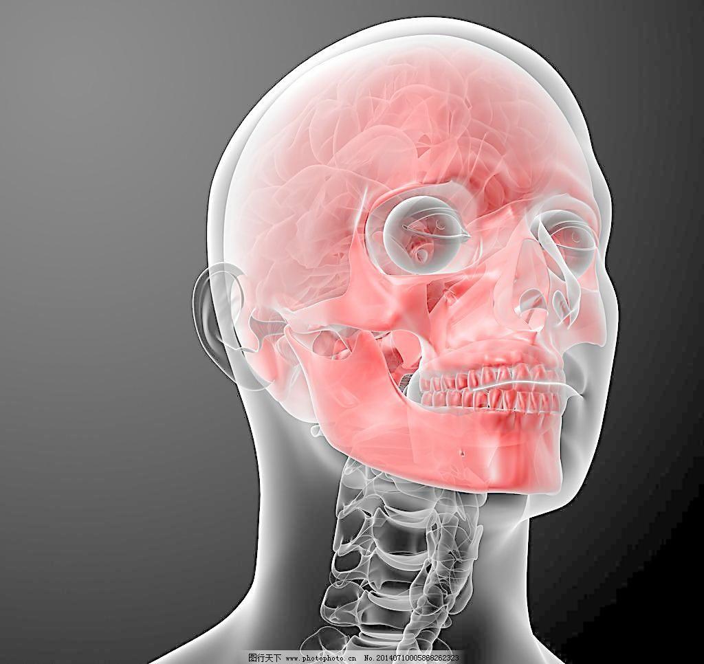 人脑头部设计 科学研究 骷髅头 人体骨骼 现代科技 人脑结构 头骨