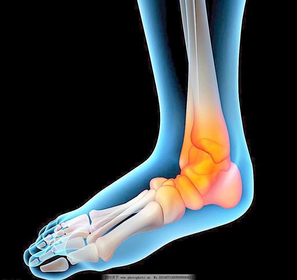 脚趾脚掌肌肉骨骼结构图片
