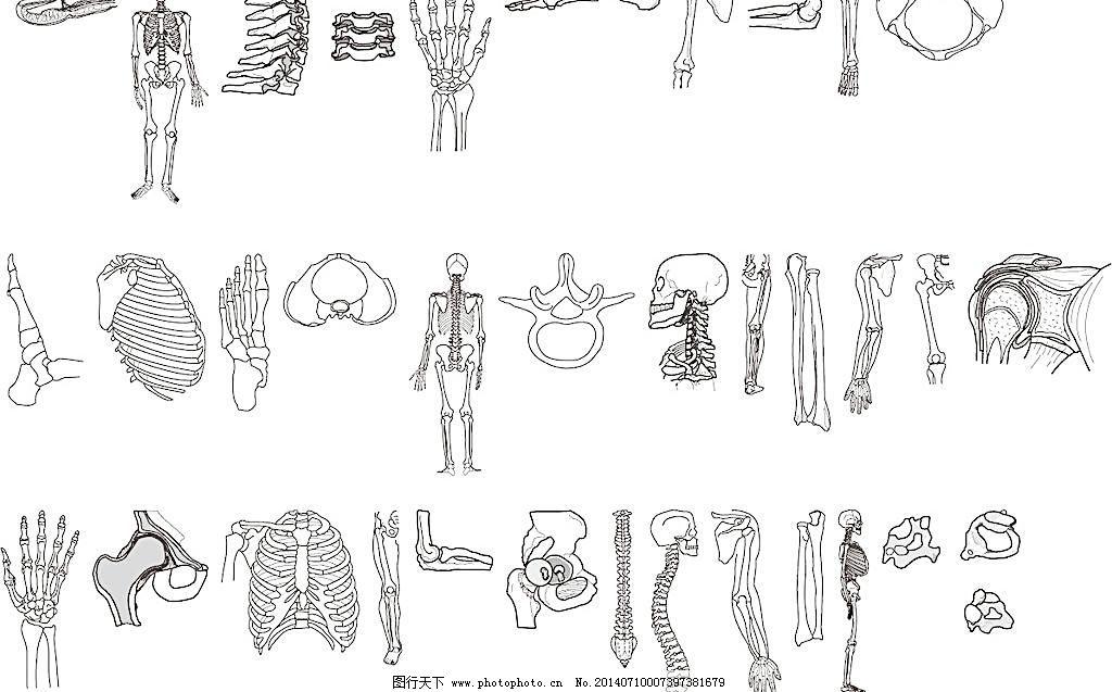人骨图片免费下载 ai 大腿 骨骼 骨头 脚掌 生活百科 手臂 手掌 医疗