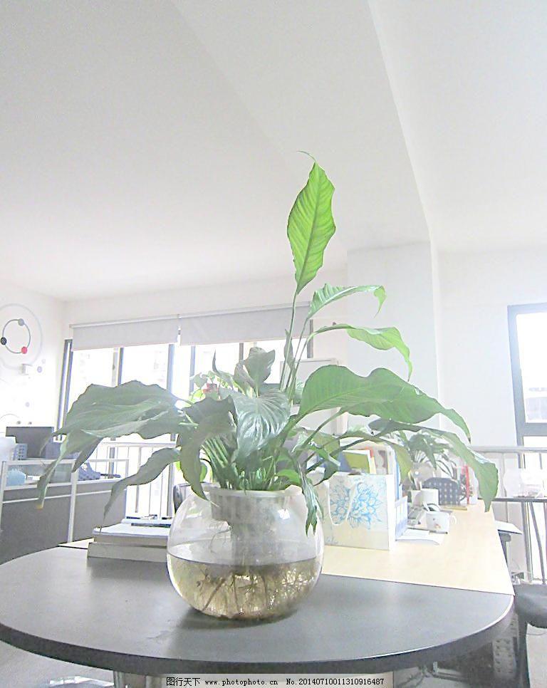 室内植物图片_室内设计_装饰素材_图行天下图库