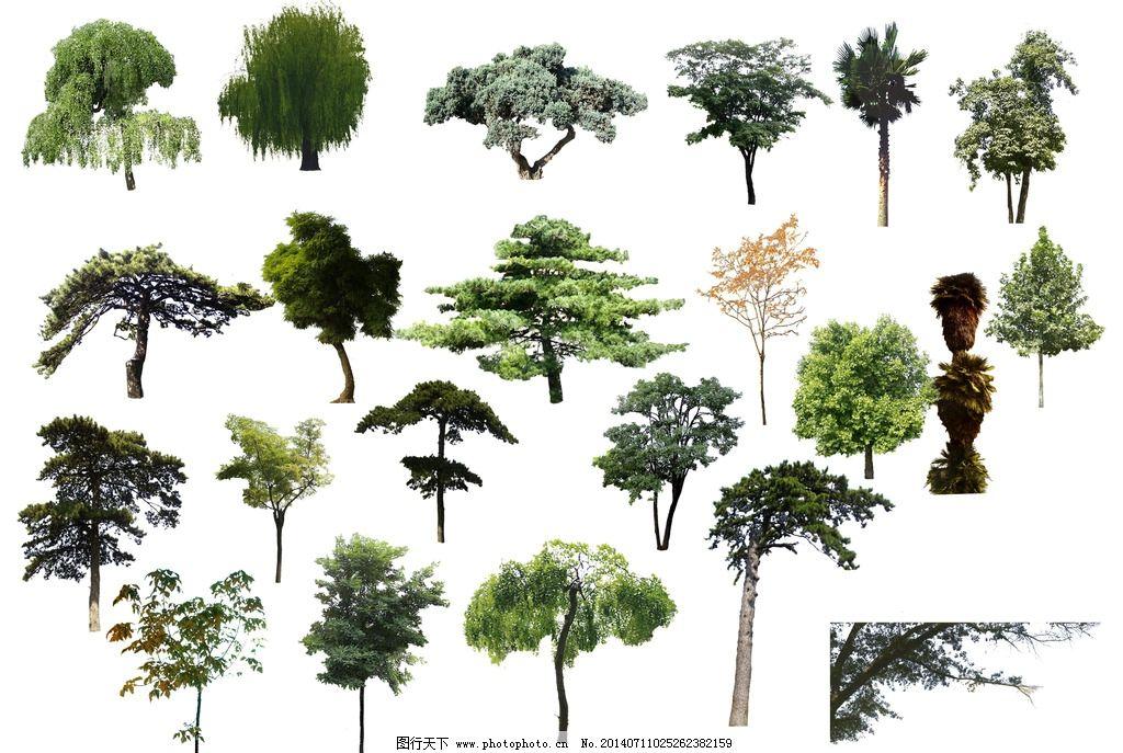 透明背景树木 树木 树 园林 园林素材 树木树叶 生物世界 设计 300dpi