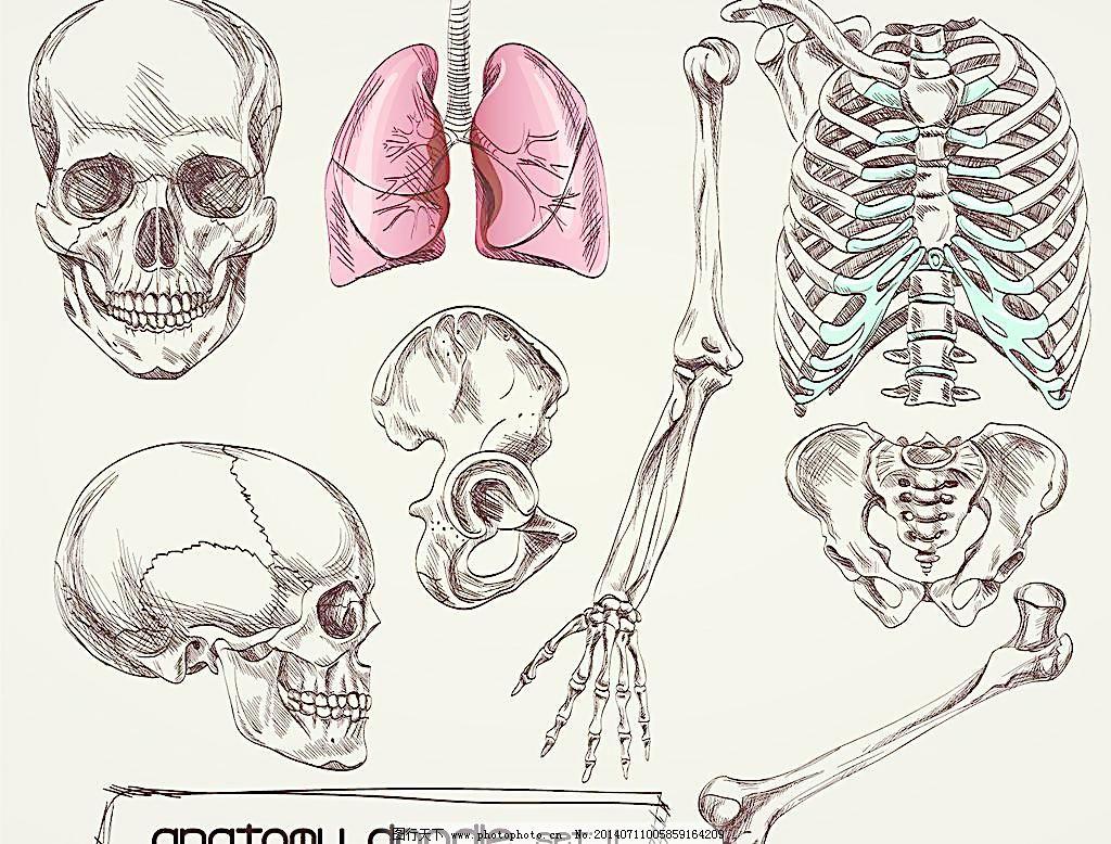 人体骨骼 人体骨骼图片免费下载 结构图 科学研究 示意图 现代科技