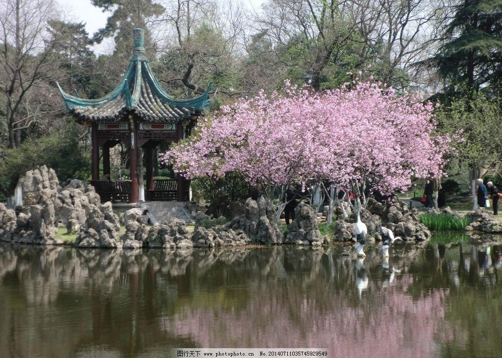 公园一角 湖 海棠 亭子 倒影 假山 春 粉色花 花草 生物世界图片
