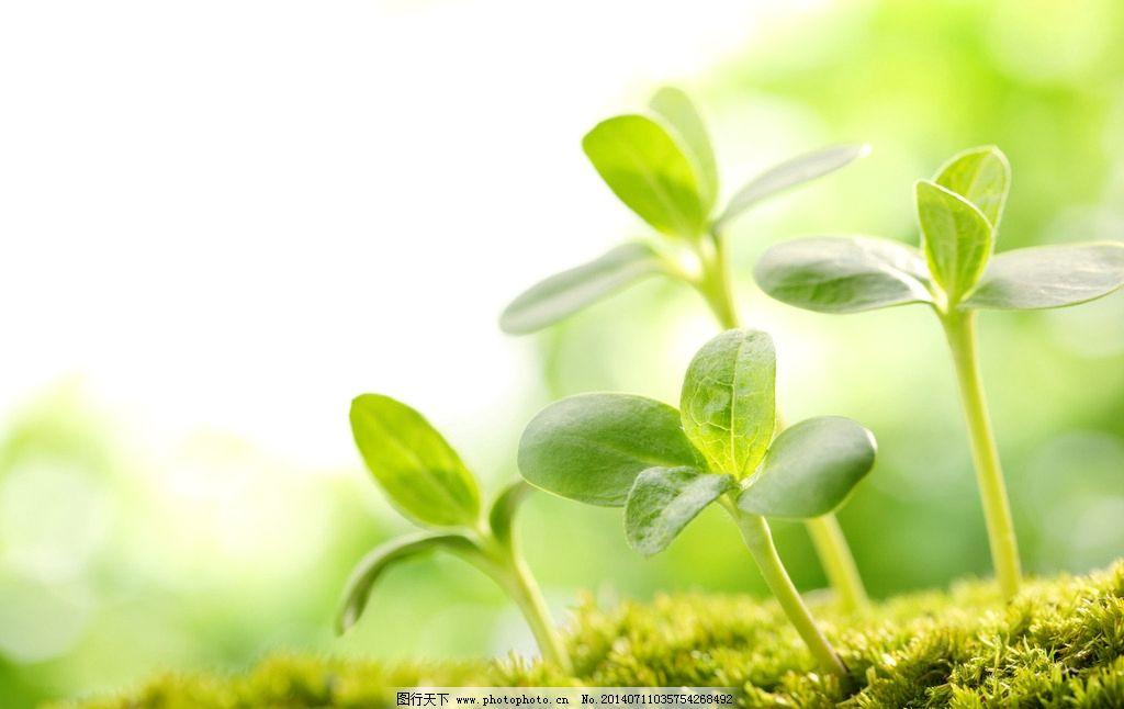 发芽 芽 嫩芽 春天 春季 出生 生长 万物生长 生命 成长 生机 植物