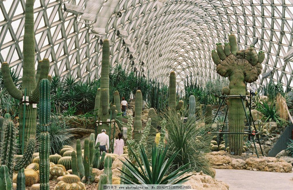沙漠植物温室 仙人球 沙漠植物 温室 辰山植物园 仙人掌 花草 生物