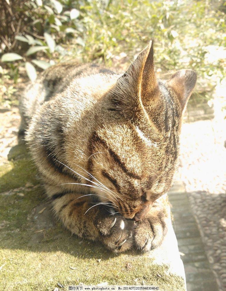 小猫 动物 宠物 猫 摄影 动物摄影 家禽家畜 生物世界 72dpi jpg