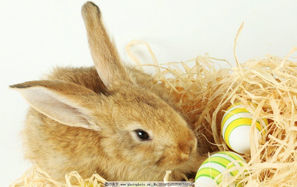 壁纸 动物 兔子 1024_645