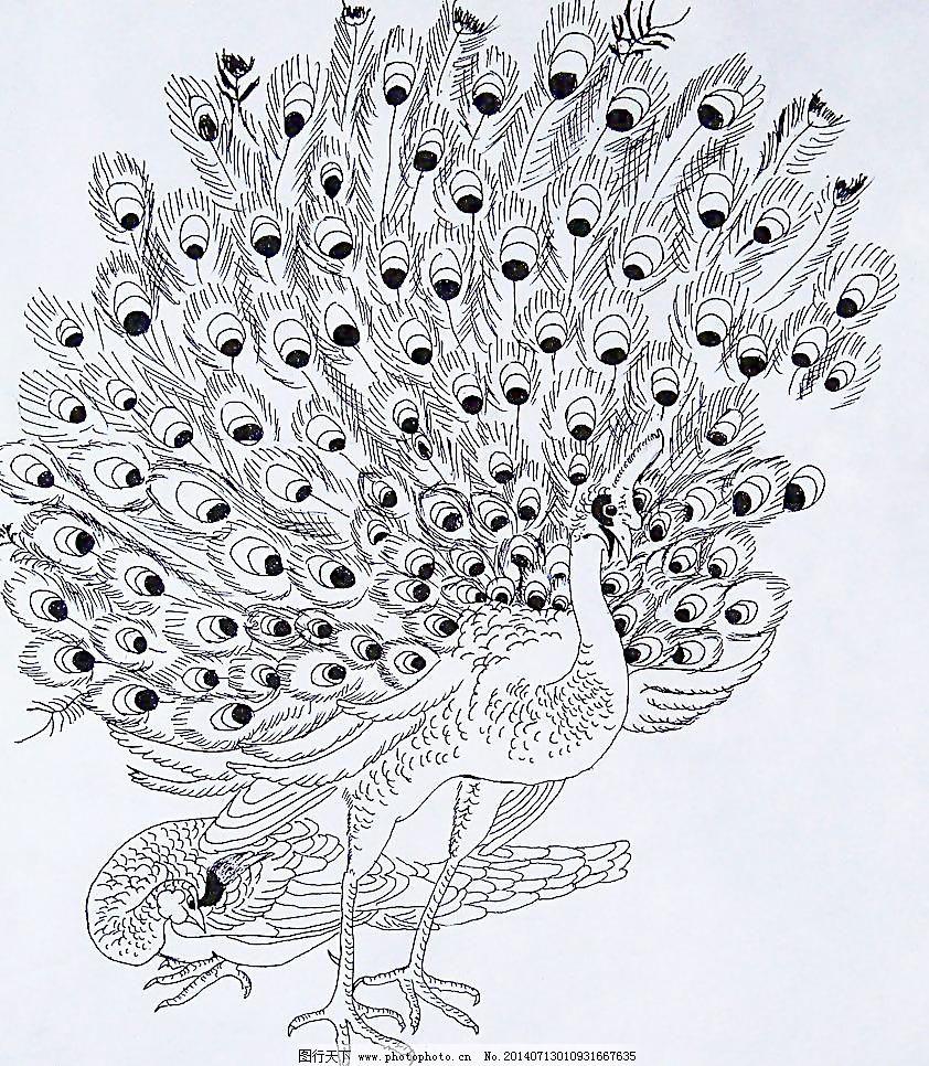 72dpi jpg 绘画书法 孔雀 美术 设计 文化艺术 学生美术作品孔雀 美